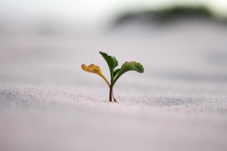Course Image Groei bevorderen in tijden van Corona | WO 1 juli 2020