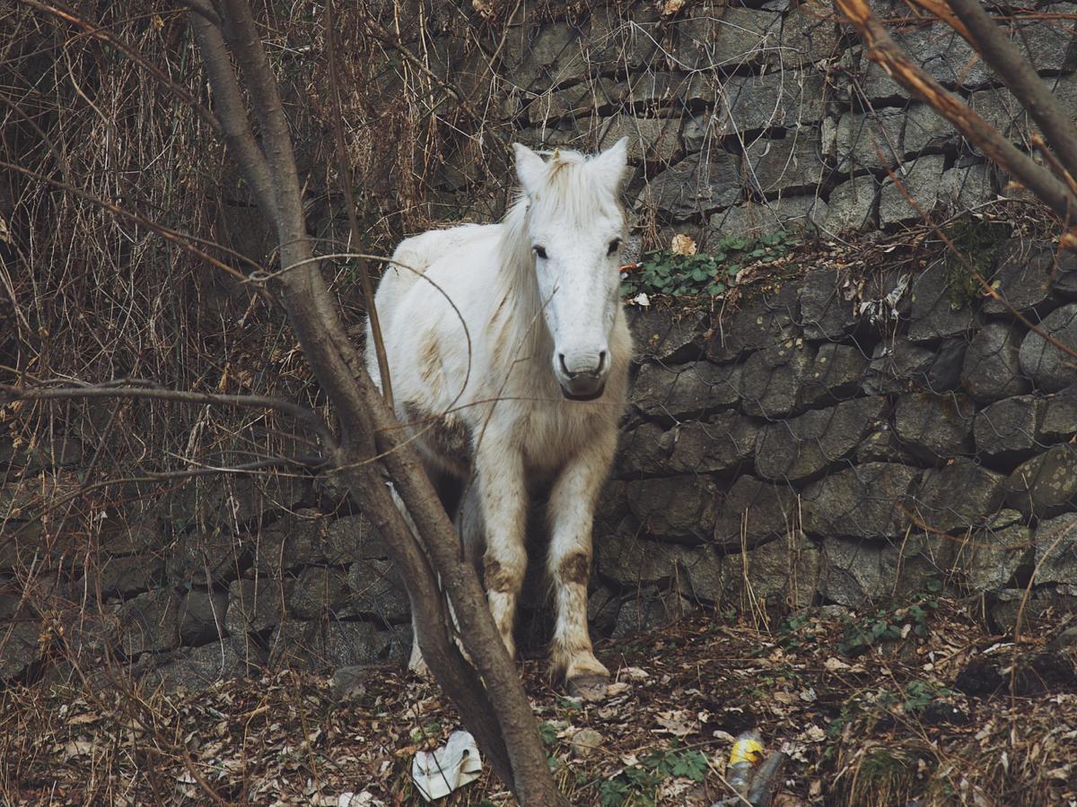 Course Image Kunnen dode paarden tot leven worden gewekt?   DO 1 OKT